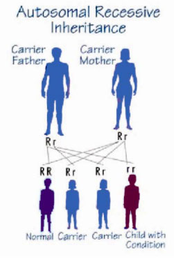 (5)Inheritance probability of Autosmal Recessive EDS when the father is  carrier and the mother is a carrier