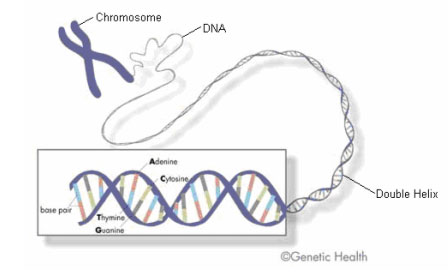 Newborn screening a genetic map is a map of the location of genes relative to each other on the chromosome genetic maps are also called linkage maps ccuart Image collections
