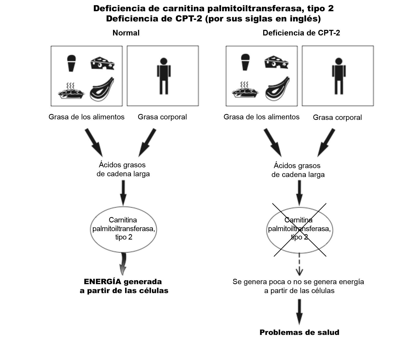 CPT-2 Diagram