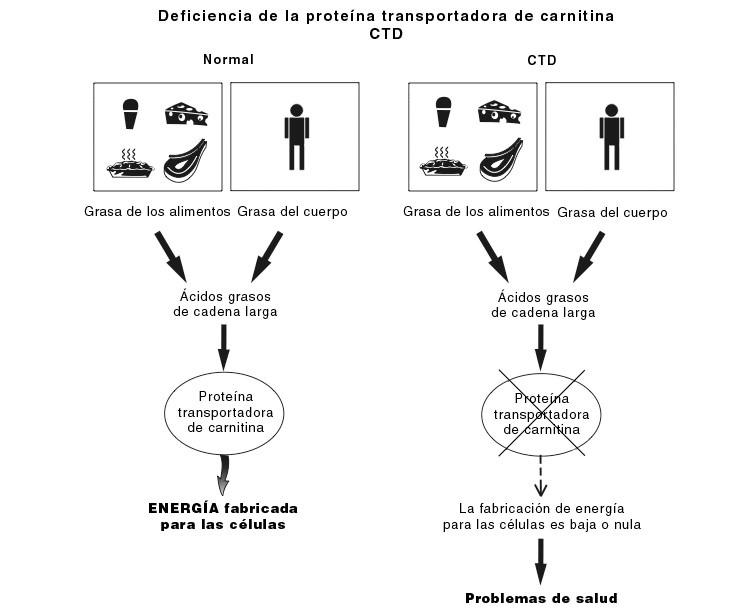CTD diagram