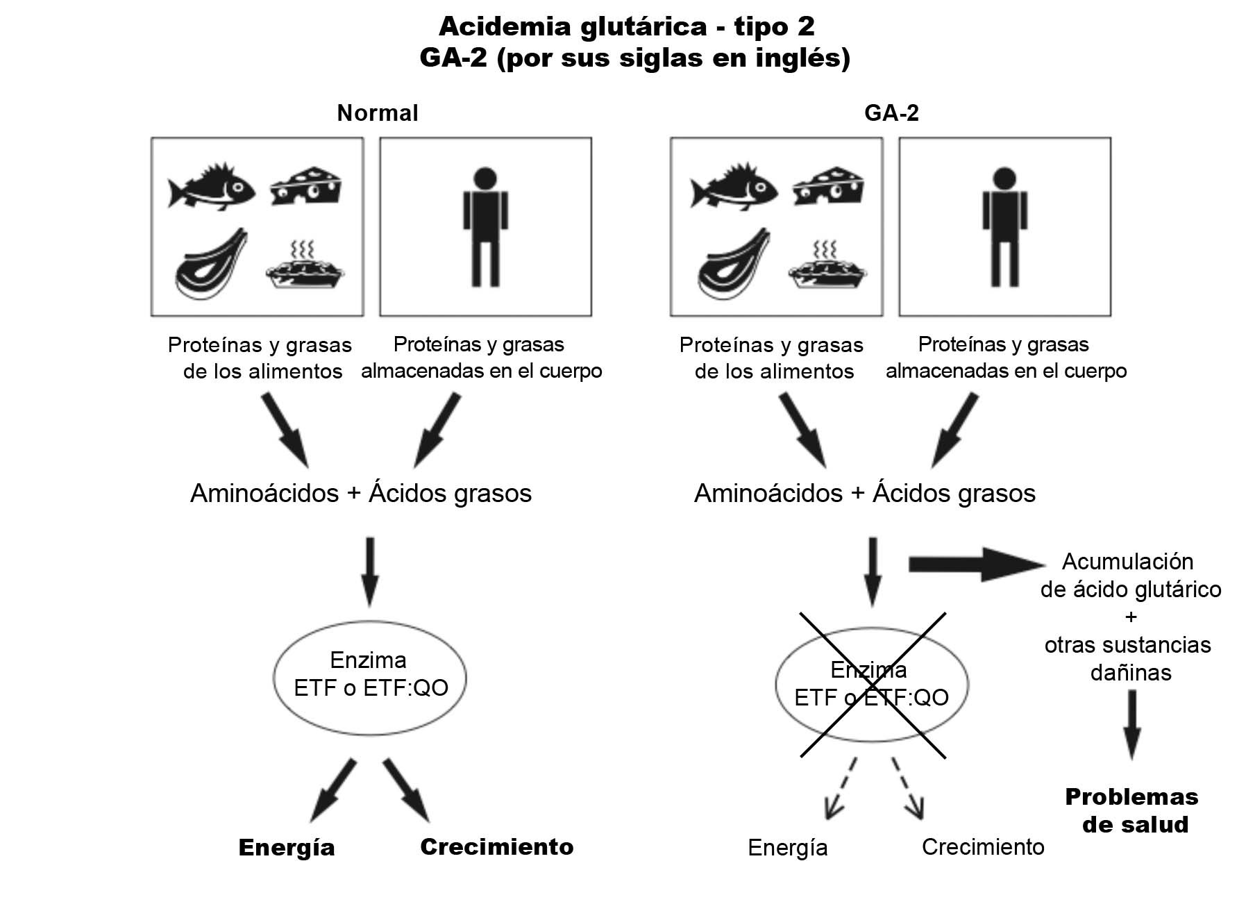 GA2 Diagram