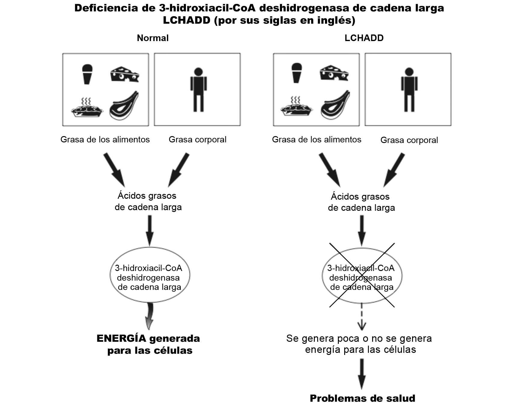 LCHADD Diagram