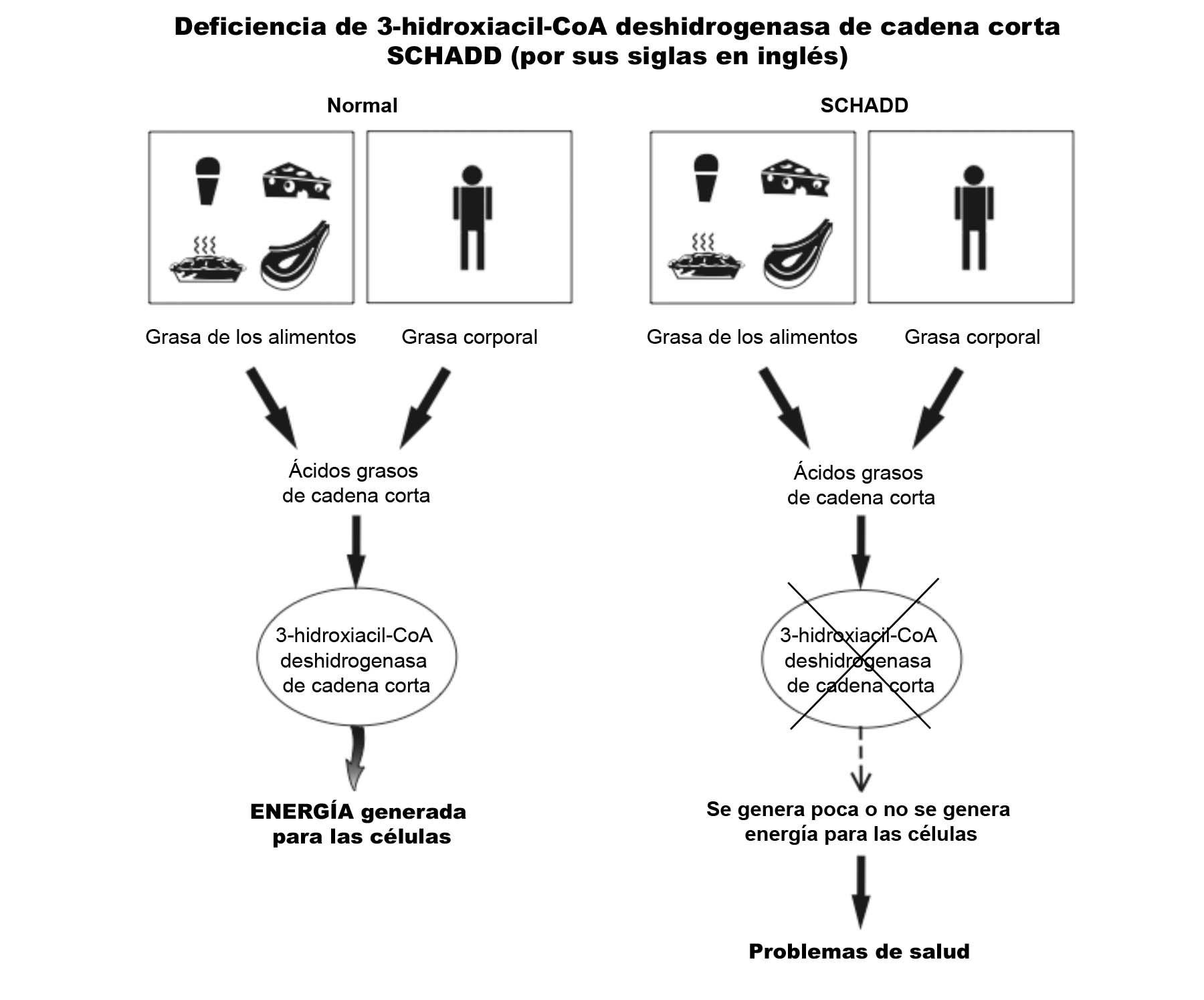 SCHADD Diagram