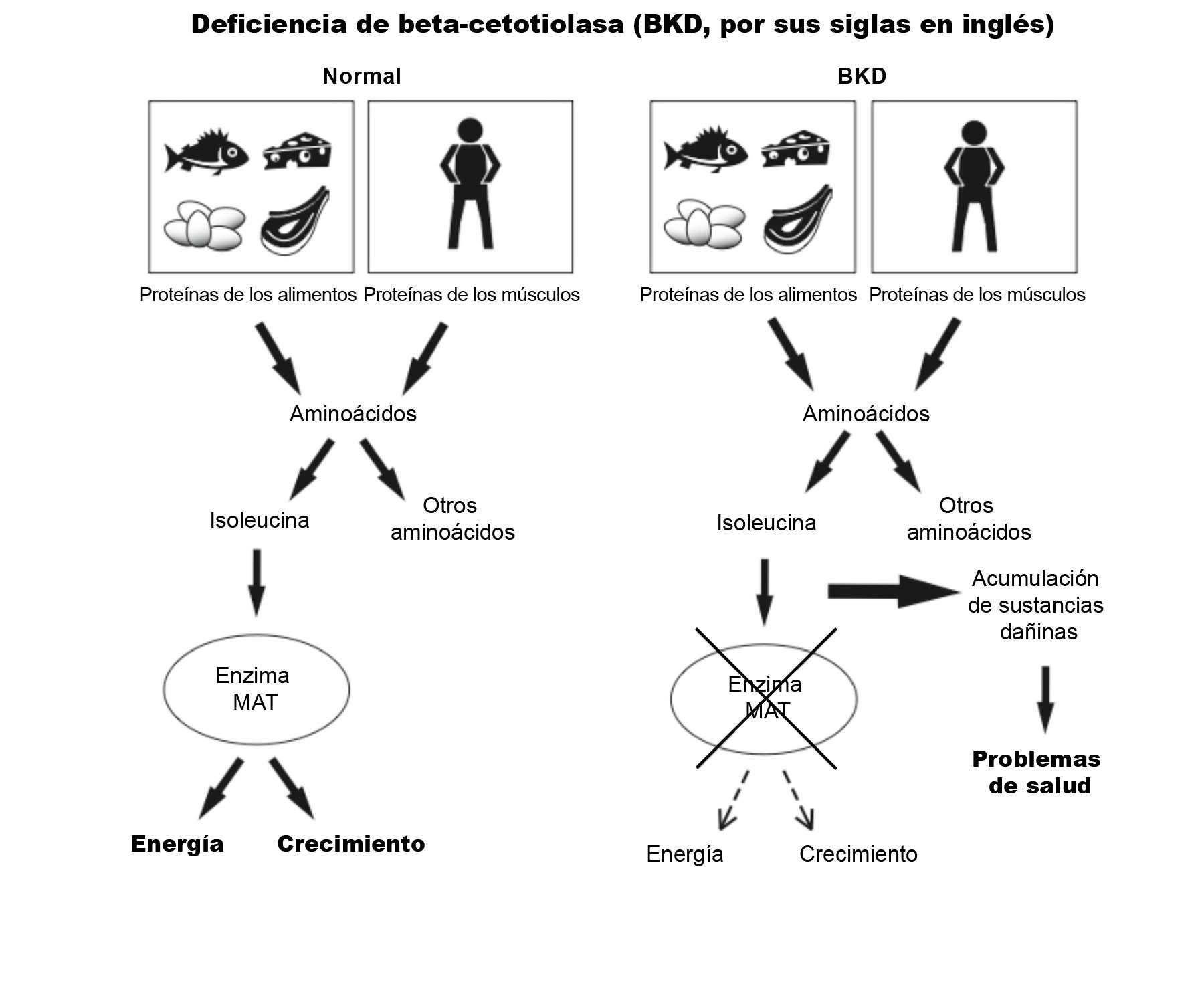 BKD Diagram