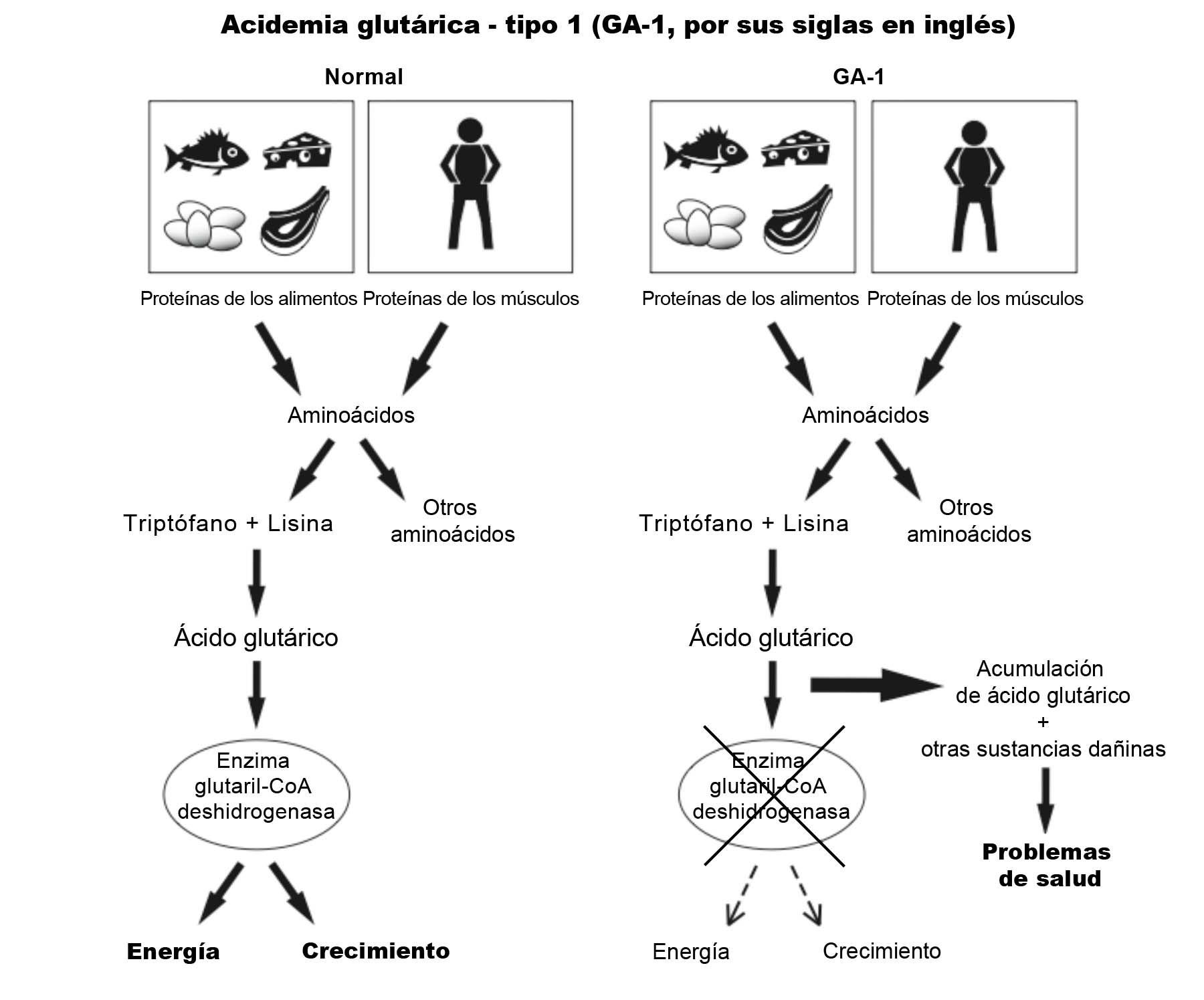 GA1 Diagram