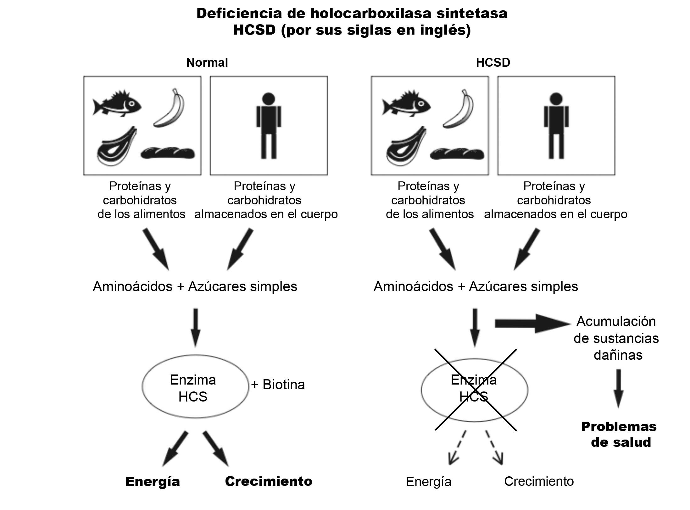 HCSD Diagram