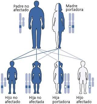 X Linked Chromosome Chart