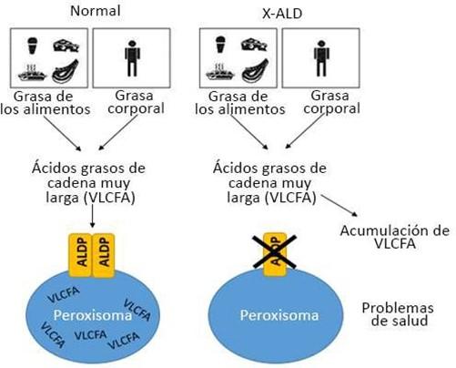 X-ALD Graphics